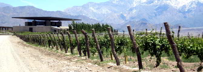 Wine Region Of Mendoza